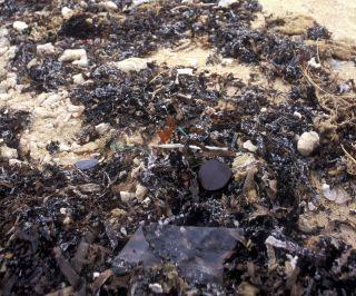 砂浜の漂着物
