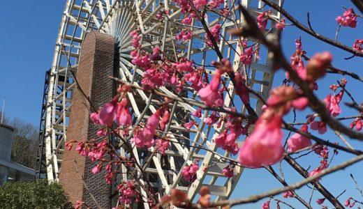 春を告げる花々が咲き始め・・・