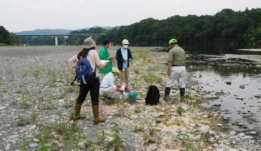 荒川の水質検査(全国一斉水質調査)
