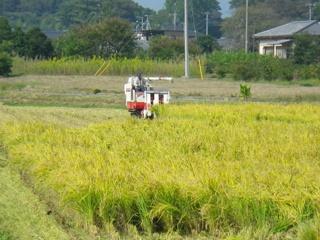 <p>写真:荒川流域の田んぼ </p>
