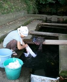 <p>写真:今も生活に使われている湧水</p>