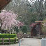 春のかわはくと水車小屋広場
