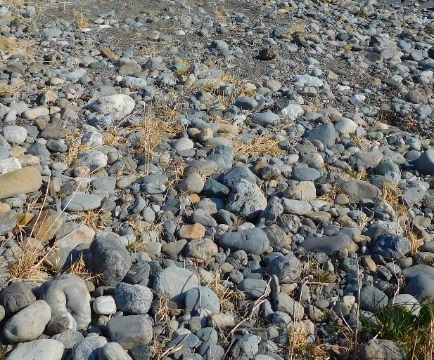 荒川のかわせみ河原の石