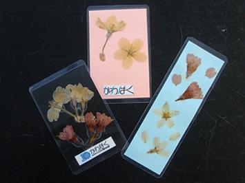 押し花カード
