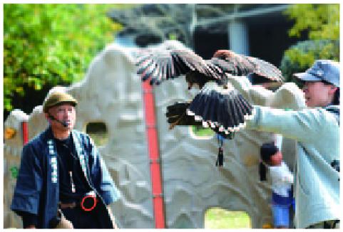 放鷹観察会の様子