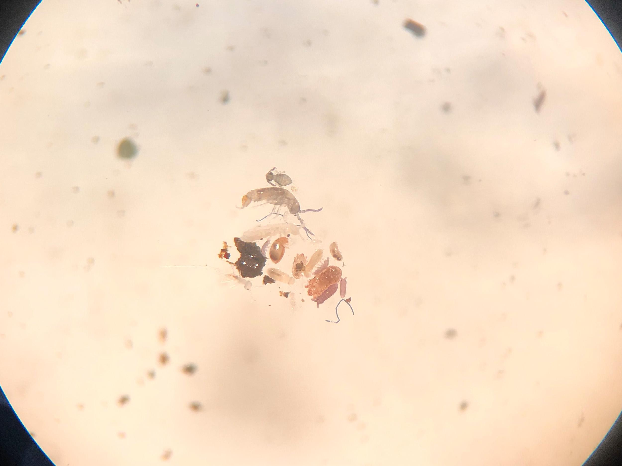 顕微鏡でのぞくと、どんな生き物が見つかるかな?